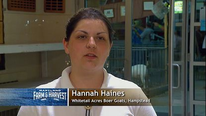 In the MPT show, Hannah Haines, who has been raising goats for years, will discuss the development of her competition goat from young kid to sale-ready adult at the Carroll County 4-H and FFA Fair in Westminster.