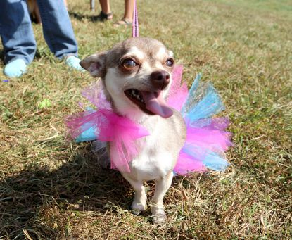DogFest is this Saturday
