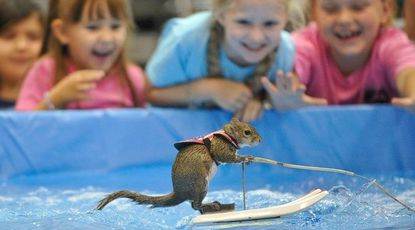 Twiggy Seven, a jet-skiing squirrel, will take to the water at the Maryland Home and Garden Show this weekend, displaying her swimming, floating and watersport skills to entertain and educate the public on water safety.