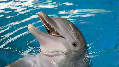 Dolphin dies at the National Aquarium after monthslong illness