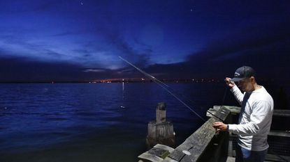 Elmer Merino of Silver Spring baits his hook as he fishes for rockfish in the Chesapeake Bay last week from Matapeake Fishing Pier. The population of rockfish, also called striped bass, is down.