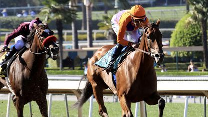 Beholder, winning the Zenyatta Stakes with jockey Gary Stevens on Sept. 26, will not be able to race in the Breeders' Cup Classic against Triple Crown winner American Pharoah.