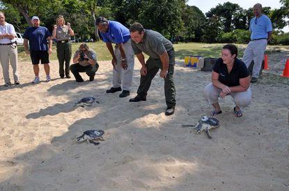 National Aquarium releases rescued sea turtles