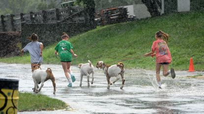 A group of young 4-H'ers and their goats hurry back to the barn as the heavy rains begin yet again during the Harford County Farm Fair opening day July 23.