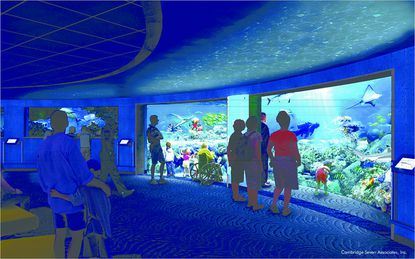 A rendering of the underwater viewing area of the National Aquarium's new Blacktip Reef exhibit, scheduled to open in summer 2013.
