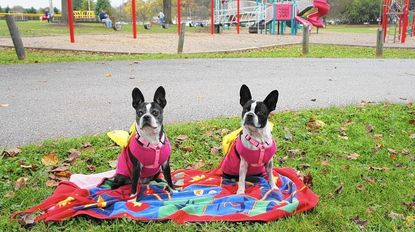 The Tails of Taneytown pet parade will be held concurrently with the Taneytown Fall Harvest Fest.