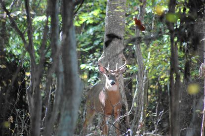 Deer hunting with trail cameras