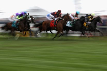 Horses race on the turf prior to the 141st running of the Preakness Stakes at Pimlico Race Course on May 21.
