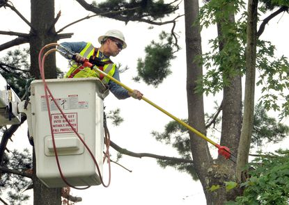 BGE bucket operator Julio Portillo trims silver maple and Eastern white pine trees along a private driveway off Stevenson Road, in an area of Pikesville that had a prolonged power outages during this summer's derecho storm.