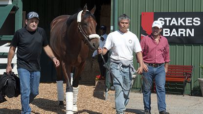 Preakness and Kentucky Derby winner American Pharoah, attempting to become the first Triple Crown winner since 1978, leaves Pimlico Race Course Monday morning. The colt will train at Churchill Downs before heading to New York and the June 6 Belmont Stakes.