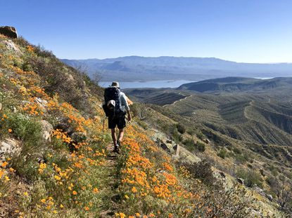 A backpacker traverses the Arizona Trail's Four Peaks passage, brightened by a profusion of spring wildflowers. Roosevelt Lake, pictured in the distance, is a popular resupply spot.