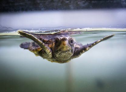 National Aquarium seeks name for its new turtle