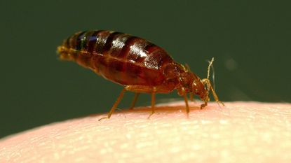 Baltimore was named the top city for bed bugs in the U.S. for the second year in a row.