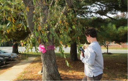 Alexander Usselman enters data on one of 300 trees he surveyed along Aberdeen's streets for his senior capstone project at Aberdeen High School's Science and Mathematics Academy last year.