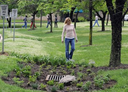 A rain garden created at Anne Arundel Community College. Survey finds 43 percent of such storm-water controls are in poor condition or missing altogether.