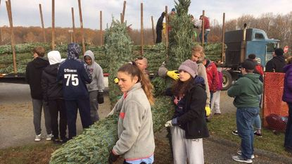 Volunteers from Bel Air High School, Bel Air Police Department Explorers Post 9010 and Boy Scout Troop 313 help unload Christmas trees from one of three trucks Saturday morning. The Bel Air Lions Club opened and will be open daily until they're sold out.