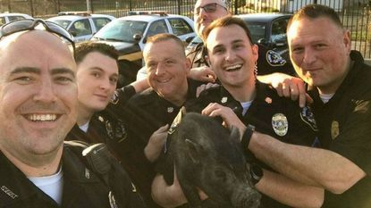 """Havre de Grace police officers pose with the pig they found wandering Sunday evening near Congress and Union avenues. Animal control took the pig to the Humane Society of Harford County, where he was named """"Flash."""""""