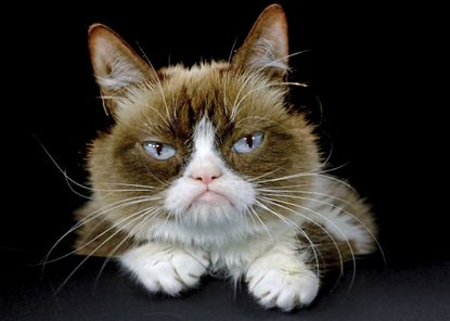 Internet sensation Grumpy Cat has 'passed away peacefully' at the age of 7