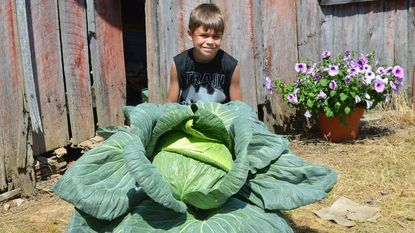 Jordan Bogarty, a student at Jarrettsville Elementary School, was randomly selected by Maryland's Agriculture Department to win a $1,000 scholarship after he grew at 26.52-pound cabbage.