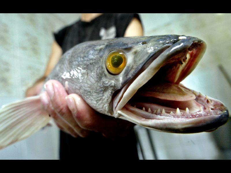Weird sea creatures and strange fish - Baltimore Sun