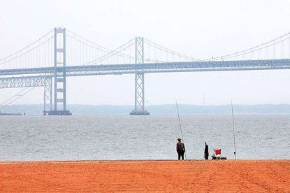 A man looks out over the Chesapeake Bay at Sandy Point State Park in Annapolis. File Photo
