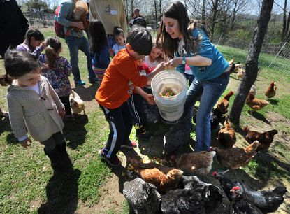 As part of the program for Family Farm Day at the Pearlstone Center, Elisheva Stark, the community garden coordinator, gets help from Jake Miller, 7, in dumping a bucket of compost -- which came from the day's luncheon -- for the chickens on the farm. At left (tan sweater) is Mia Klein, 3.