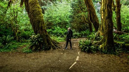 """Local photographer and videographer Nick Pappas is pictured in a photograph he took in the Hoh Rain Forest in Washington State titled """"Green Giants."""""""