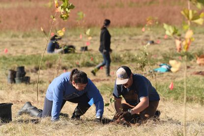 Maggie and Zach Carnegie of Finksburg worked together last fall on planting trees, joined by other volunteers for the Chesapeake Bay Foundation, at Knox Farm in Taneytown, Md. More than 2,000 trees were planted on more than eight acres along Piney Creek.