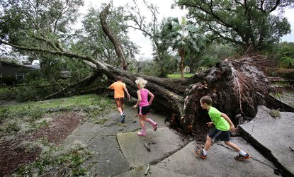 Kids play among fallen oak trees in the Dommerich Estates neighborhood in Maitland Fla. on Monday, Sept. 11, 2017 after Hurricane Irma passed through central Florida.