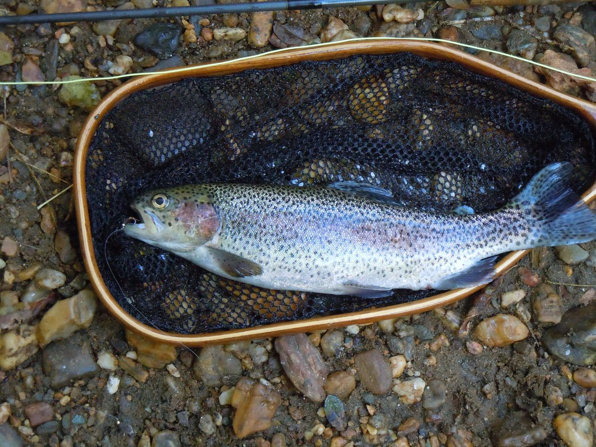 DNR to stock streams and ponds with trout raised in hatcheries