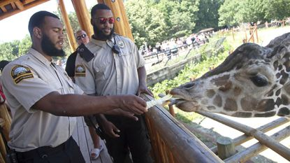 In this July 6, 2018, photo, Minnesota football players Jerry Gibson, right, and Winston DeLattiboudere (Howard) feed a giraffe while working as security guards this summer at the Como Park Zoo and Conservatory for the city of St. Paul, Minn.