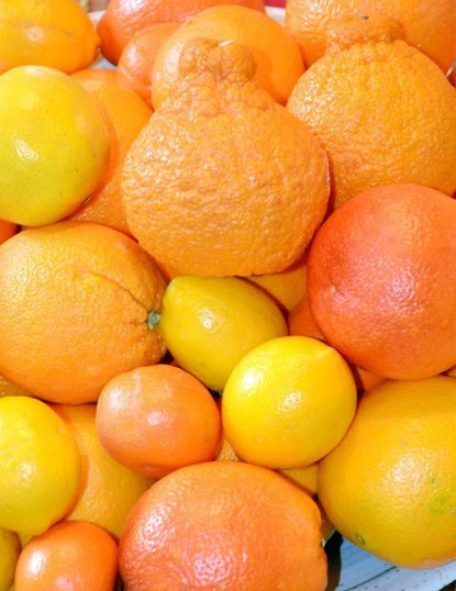 Foraging for Flavor: The warming flavors of citrus