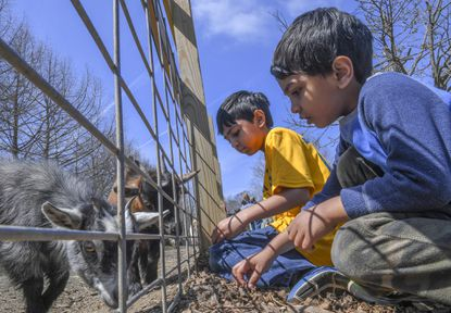 Saket Dhakad and younger brother Madhav (right) of Columbia feed goats at Clark's Elioak Farm.