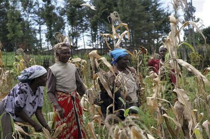 UN using food aid as lever to lift African farmers
