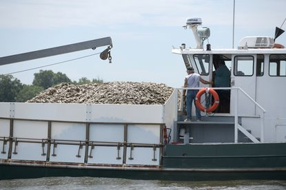 The Severn River Association and the Oyster Recovery Partnership have teamed up to fundraise and plant 10 million oysters in the Severn. The Robert Lee is used to distribute oysters into the Severn River. The Severn River Association and the Oyster Recovery Partnership have teamed up to fundraise and plant 10 million oysters in the Severn.