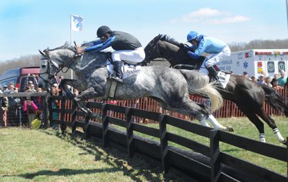 Grinding Speed rallies to win My Lady's Manor Steeplechase
