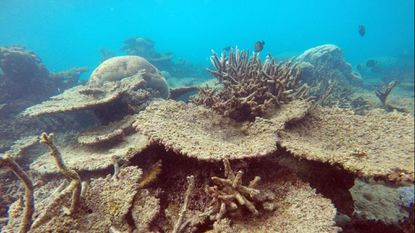 A dead and eroding section of Australia's Great Barrier Reef that bleached because of rising sea temperatures. The world's oceans hit record-high temperatures in 2018, scientists said.