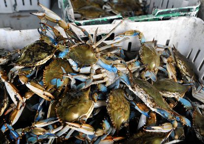 Crabs 101: A guide to cooking, eating and enjoying Maryland's most famous shellfish