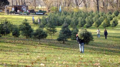 Customers buy Christmas trees from a north Baltimore County farm in 2014.