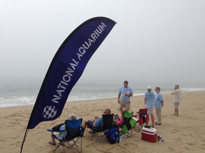 The foggy scene at the National Aquarium's dolphin count at Ocean City on Friday, July 11.