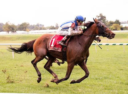 Interrupted, a 4-year-old homebred filly, has now won all four of her starts across Laurel's turf course.