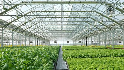 Gotham Greens, a Chicago-based urban farm operation, is opening a large greenhouse at Sparrows Point.