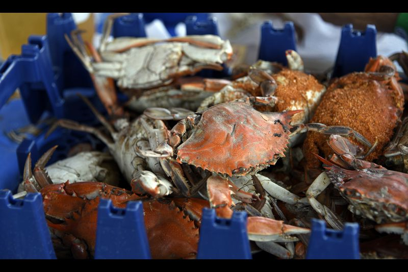 Cool Breeze Is Star Of Crisfield S Tawes Crab Festival Baltimore Sun