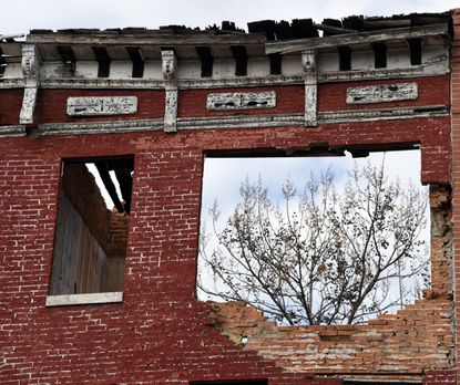 A tree can be seen through a broken wall of a vacant building on the 1300 block of Harlem Avenue in Harlem Park, West Baltimore.