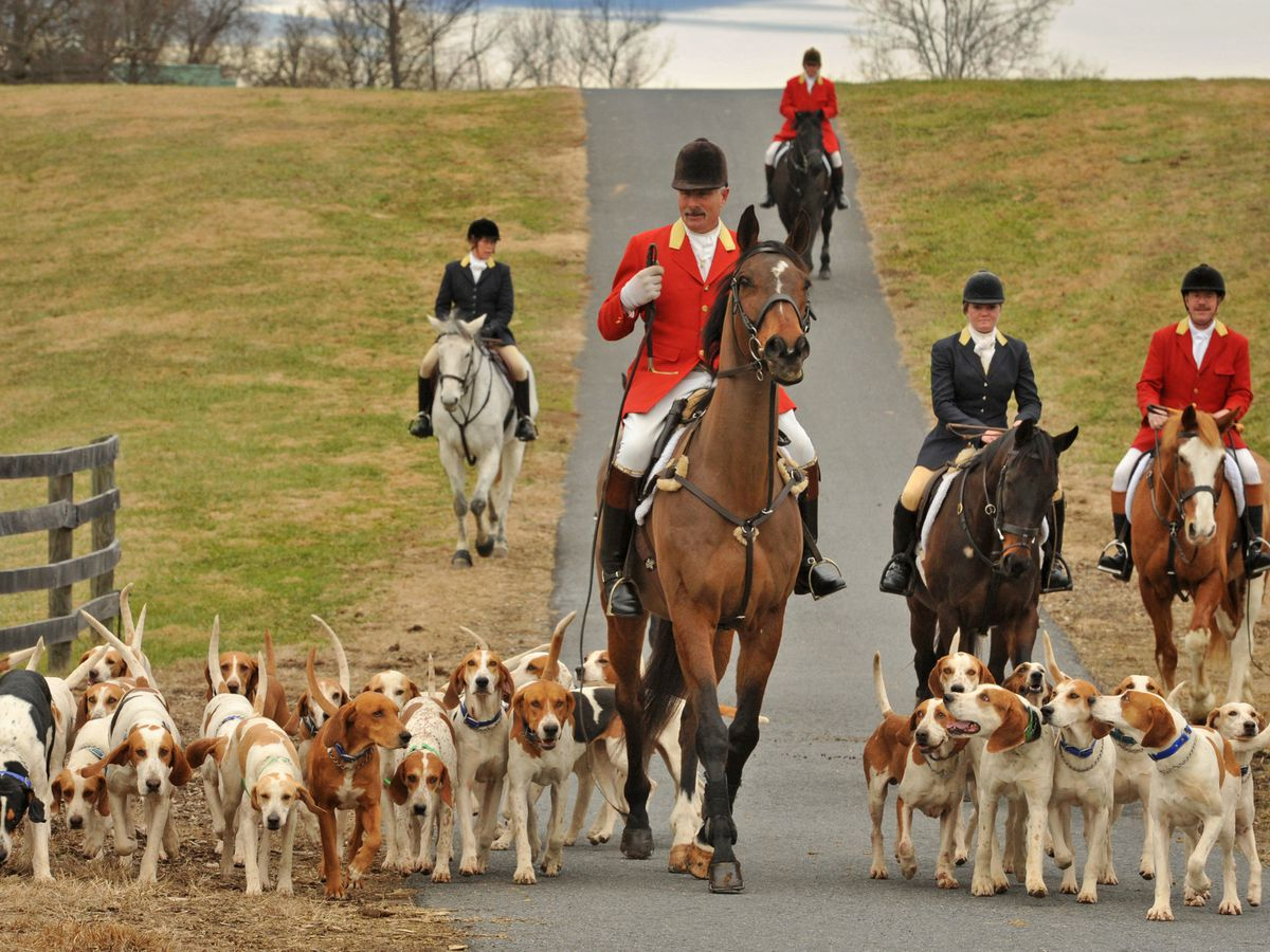 Forget football, in Maryland's horse country foxhunting is the ...