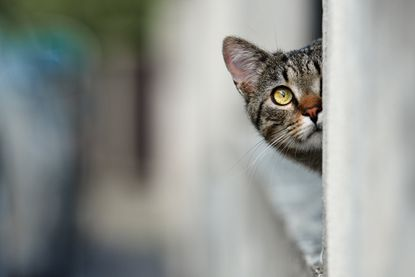 A kitten (not pictured) has tested positive for rabies, and Carroll County health officials are asking anyone who might have had contact with the animal to reach out.