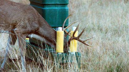 Deer self-eradicate ticks with new feeders in county parks