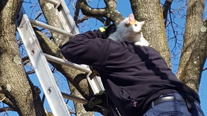 EMT Firefighter Darnell Roberts, from Catonsville's Station No. 4, rescues a cat from a tree in Catonsville on Feb. 15.