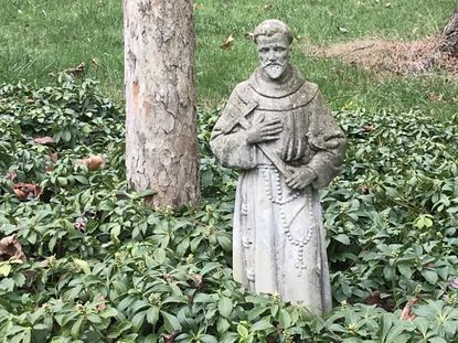 A garden statue of St. Francis stands in front a hawthorn tree trunk.