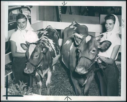 The Dickerson sisters holding their winning Guernseys at the State Fair. September 4, 1952.